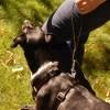 Traffic Lead - short leather dog leash/handle