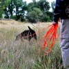 Custom Brahma Lead - dog training leash / tracking long line