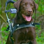 albin alex and axel 1 - Service Dogs in Action