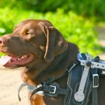 albin alex and axel 3 - Service Dogs in Action