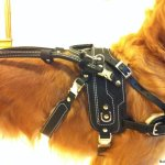 bradley guide on bah with detachable handle - Service Dogs in Action