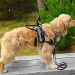 hero - Service Dogs in Action