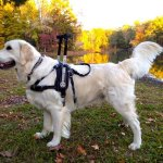 msh aggire - Service Dogs in Action