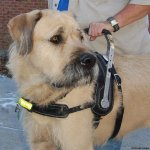 msh falcor - Service Dogs in Action