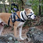 msh figura - Service Dogs in Action