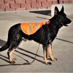 CLEARANCE: Reflective Safety Vest - high viz