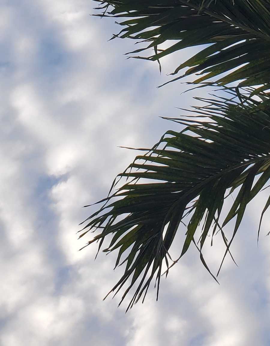 sky and trees in Dominican Republic