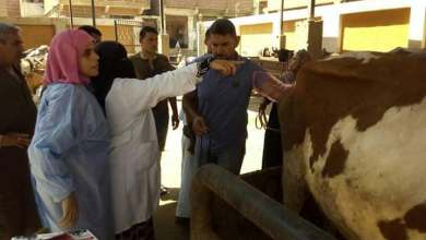 Photo of المنوفية بدء المسح الشامل للأمراض التناسلية للأبقار والجاموس بجهاز السونار