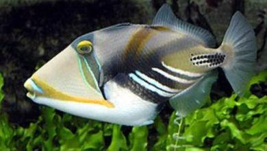 Photo of عالم بيئة بحرية : لا وجود لسمكة بفم وأسنان تشبه الإنسان .