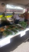 Vendors from throughout the Country selling seeds and food plants