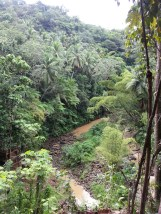 Zip Lining in Dennery (14)