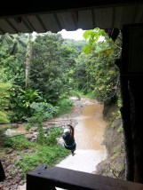 Zip Lining in Dennery (8)