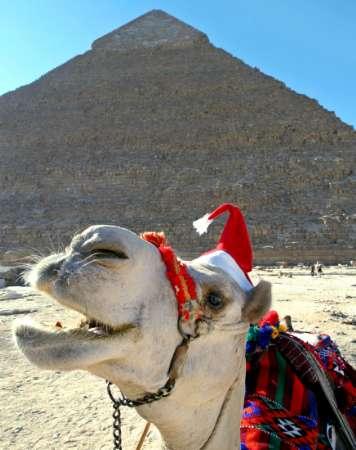 Carla in a Camel Santa Hat