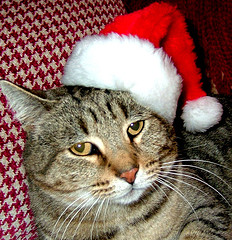 Carla in a Cat Santa Hat