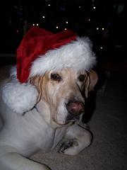Carla in a Dog Santa Hat
