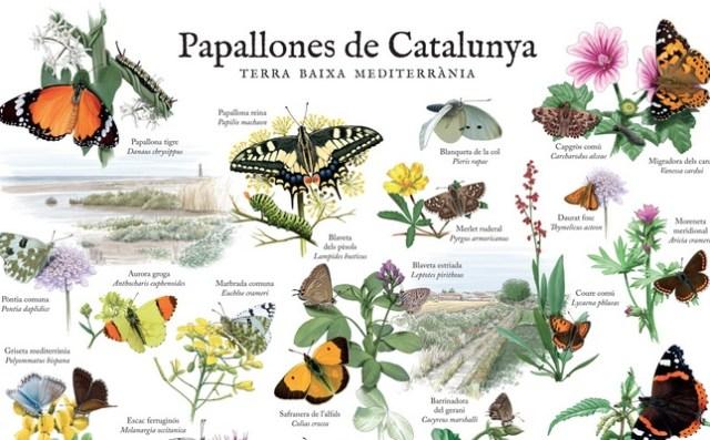pòster de les papallones