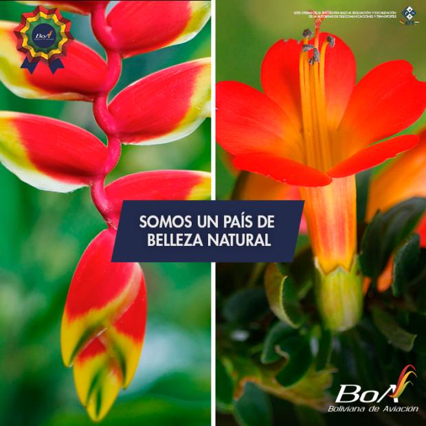 Bolivia's national flowers