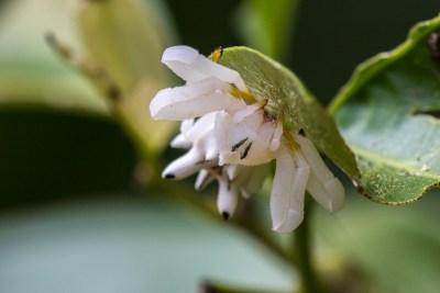 Krabbeedderkop fra Madidi