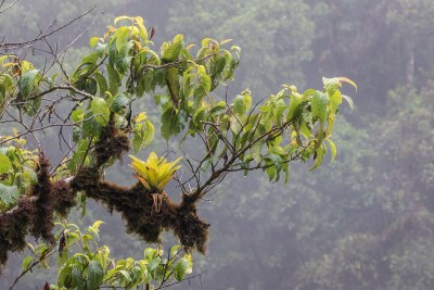 Tågeskov fra Yungas området