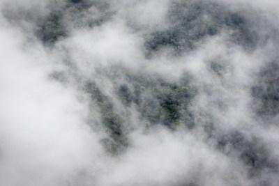 Skoven damper efter regn
