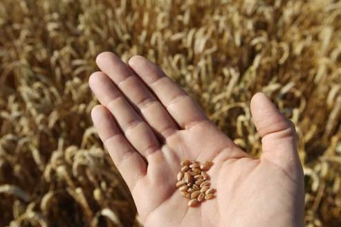scambio dei semi