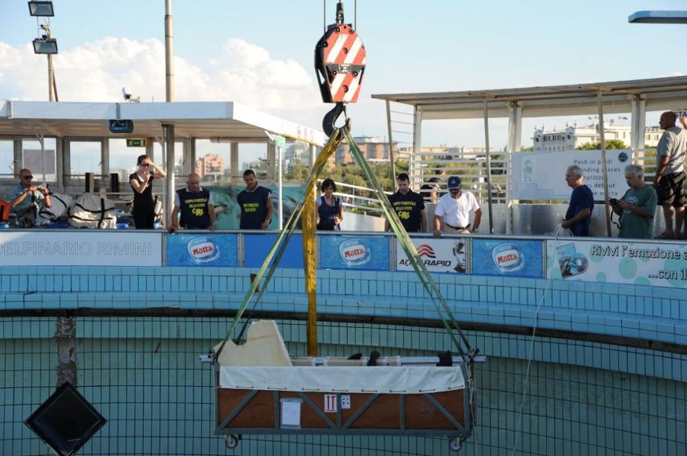 Rimini, i delfini lasciano l'acquario