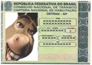 cnh-burro.001