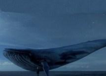 baleia-azul-1