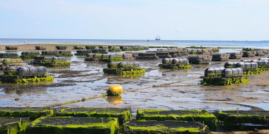 Acuicultura como motor del crecimiento del consumo de pescado y marisco