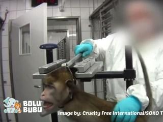 kekejaman praktik uji coba hewan
