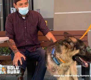 anjing berkaki tiga diadopsi