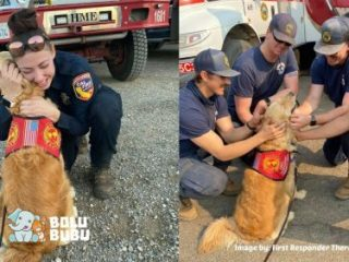 anjing terapi untuk pemadam kebakaran
