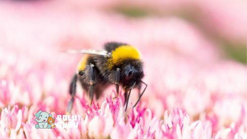 bumblebee terancam punah