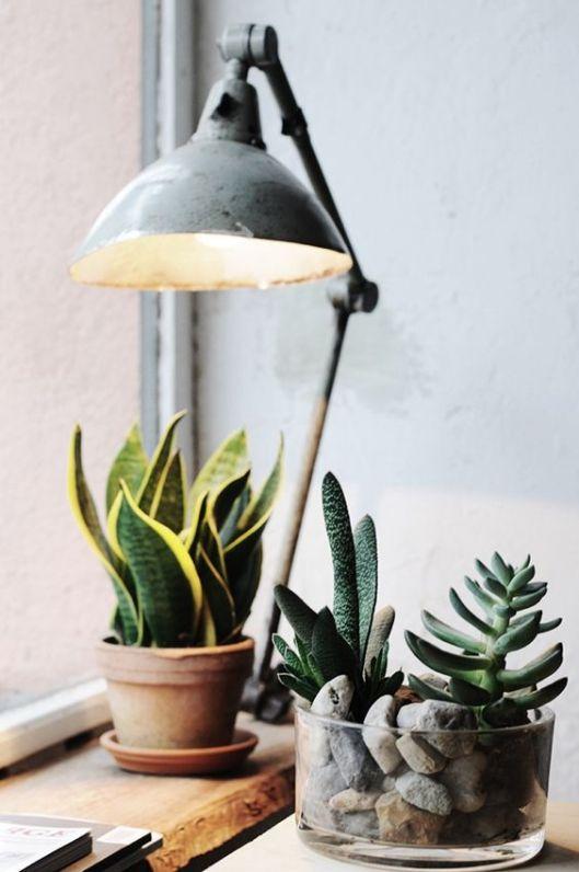 L'alliance des cactus et d'une lampe ancienne, ça peut faire des miracles visuels !