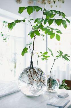 Je trouve ça magnifique ces racines apparentes, voir la vie se développer, c'est beau non ?