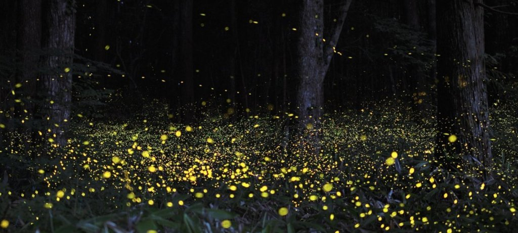 Fireflies all around the forest
