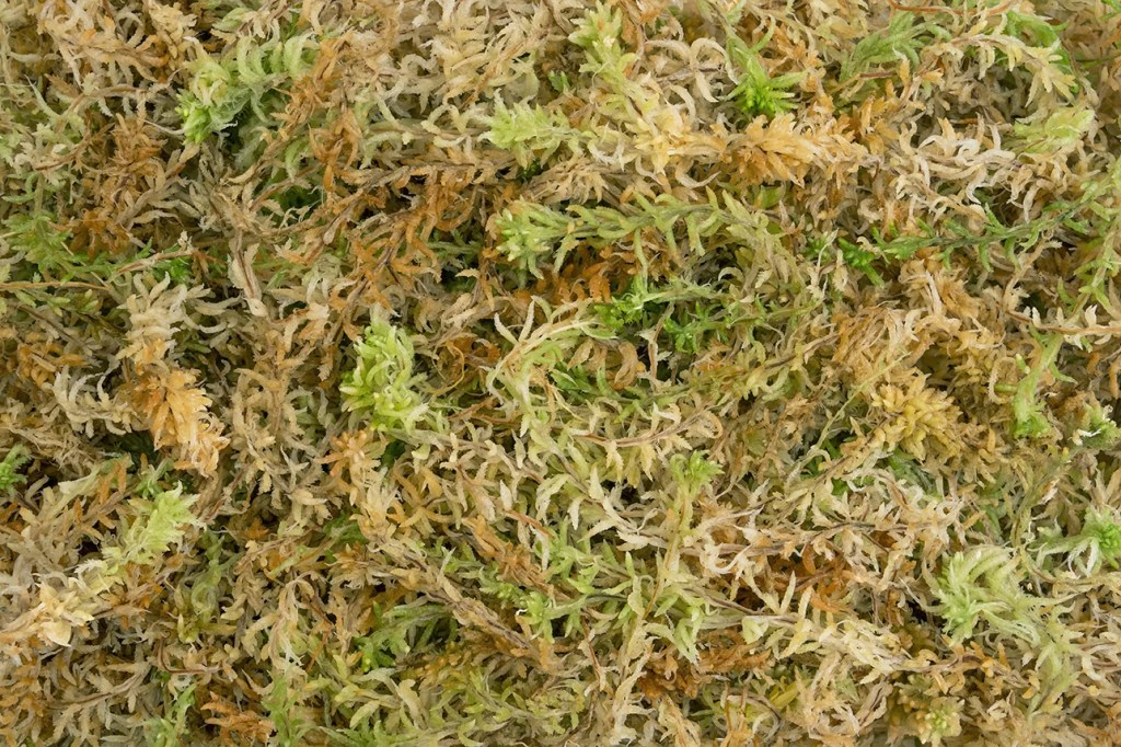 Protected: Premium Sphagnum Moss (No Shipping)