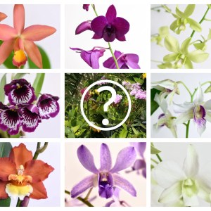 Orchids Mystery Box – 3 Orchids (see description)
