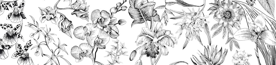 Floral Art Exotic Orchid Banner
