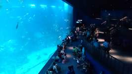 Melihat Kehidupan Bawah Laut yang Mengagumkan di SEA Aquarium Singapore