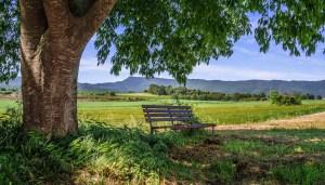 landscape, spring, bank