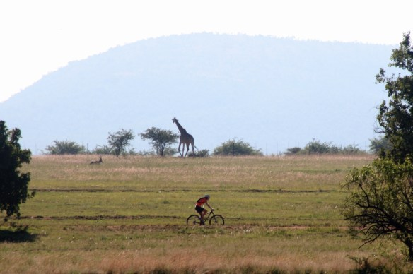 Mtb and giraffe