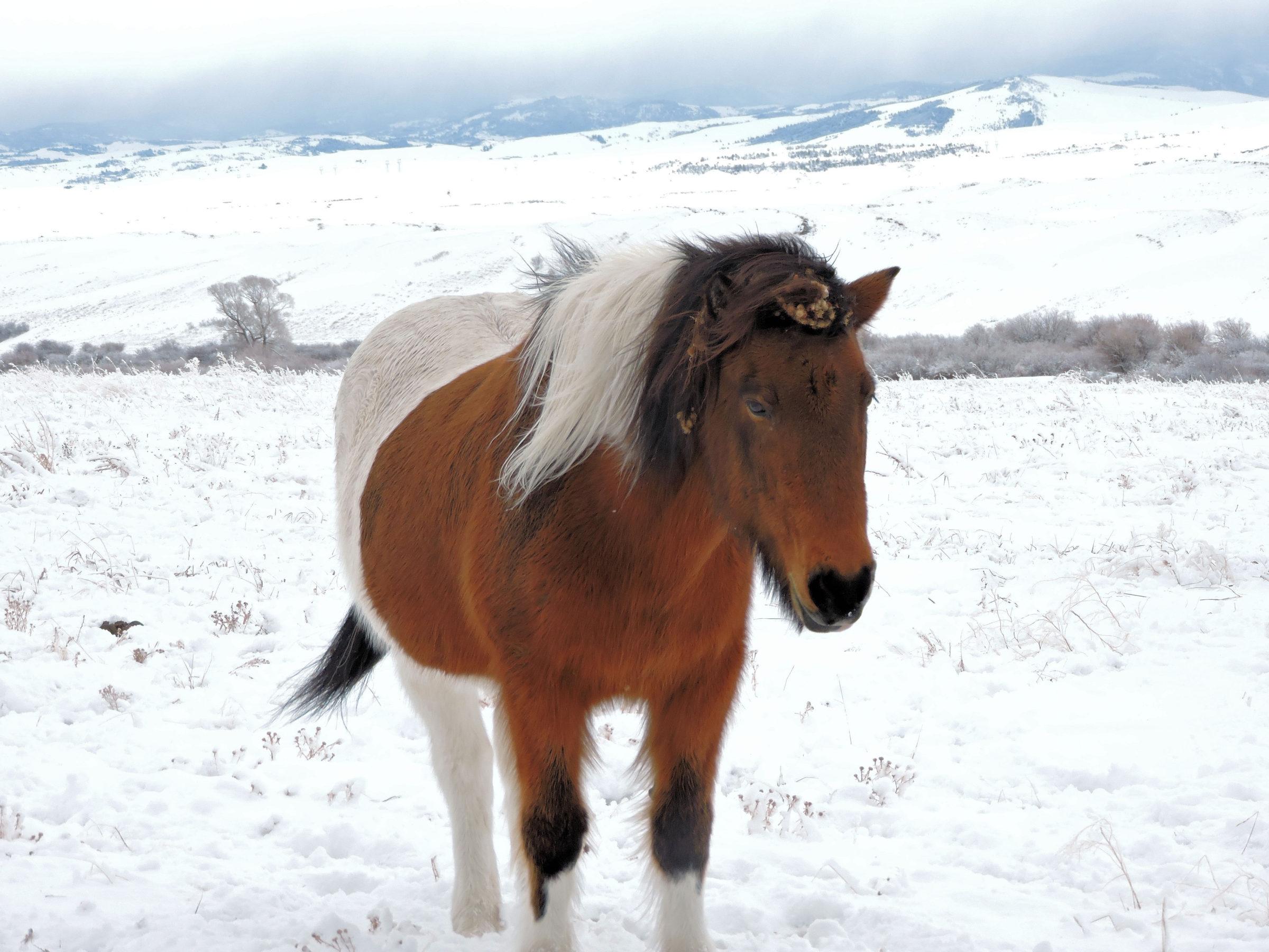 Bonanza Creek Country Ranch Montana