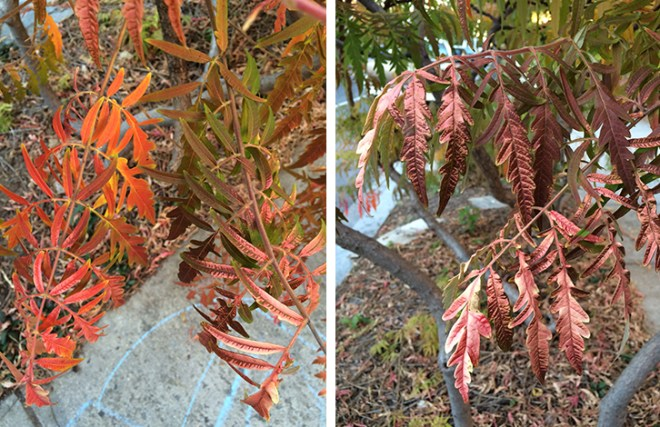 Orange, red and bronze foliage in October.
