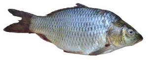 Haziran Ayı İçin Balık Takvimi