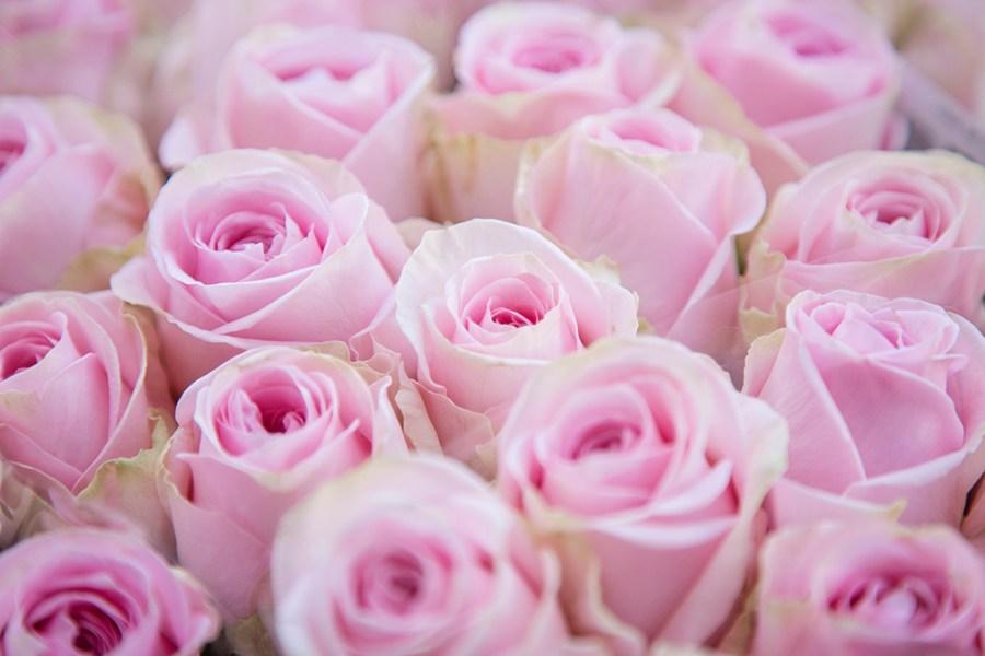 Rose Heidi