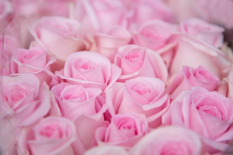 Rose Sweet Akito
