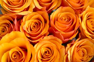 Rose Tycoon