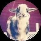 Happy Goat Avatar