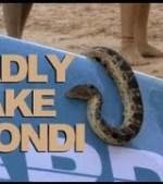 Sea-Snake-Bondi-Rescue-S6